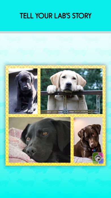 Pet Photo Collage Grid Jointer