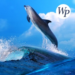 Ocean - Sea World HD Wallpapers / Backgrounds Free