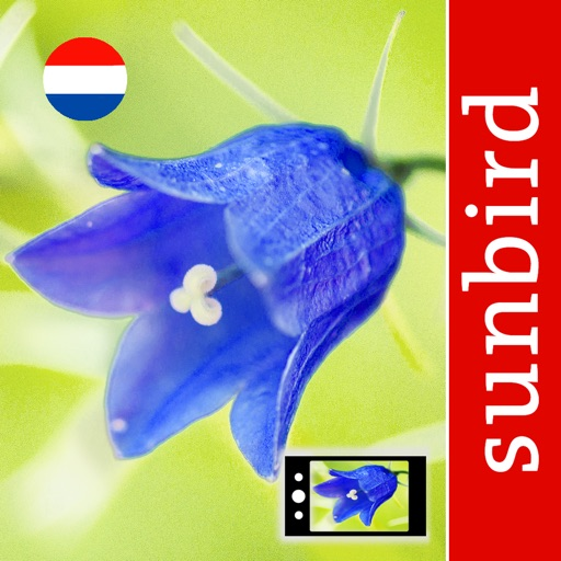 Wild Flower Id Netherlands Automatic Recognition