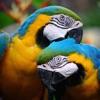 SGS Birds - Shukavana - iPhoneアプリ