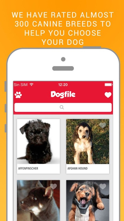 Dog File: Find the perfect dog breed that fits you
