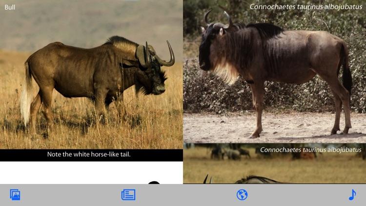 Stuarts' African Mammals screenshot-4