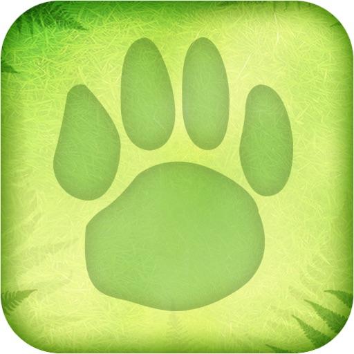 Rainforest Survival Challenge  Review