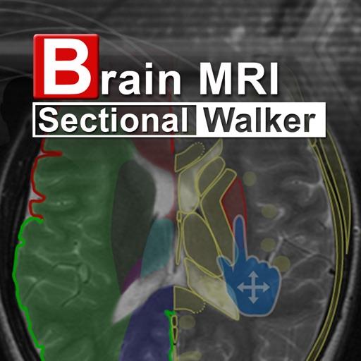 Brain MRI Sectional Walker