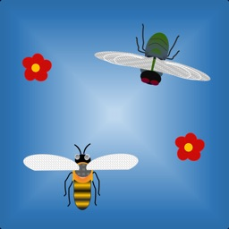 Bee-vs-Fly