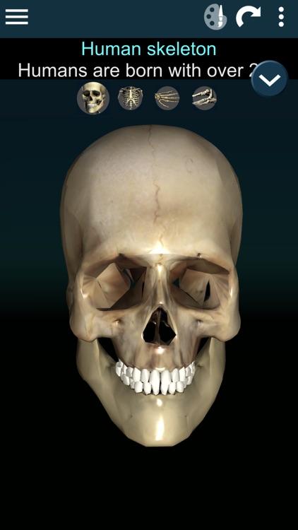 Bones 3D (Anatomy) screenshot-0