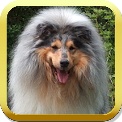 Collie Puzzle icon