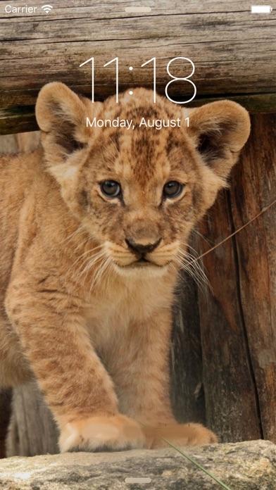 Animal Wallpapers Screenshot on iOS