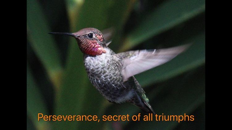 Hummingbird Moments