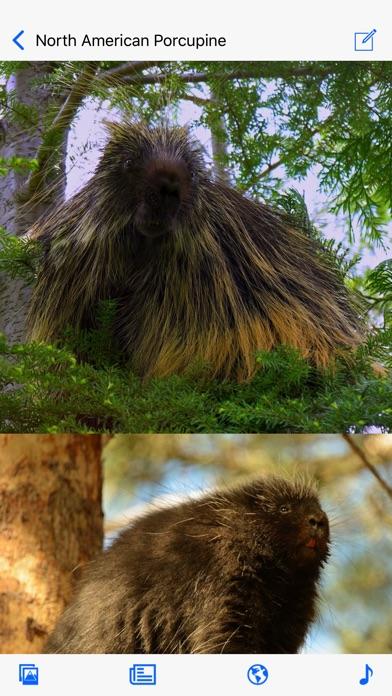 Stuarts North American Mammals Screenshot