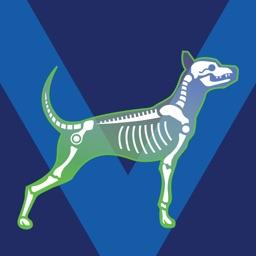 Bone Viewer - Dog Skeleton