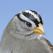 iBird Yard+ Guide to Birds