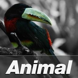 POA S601S Animal