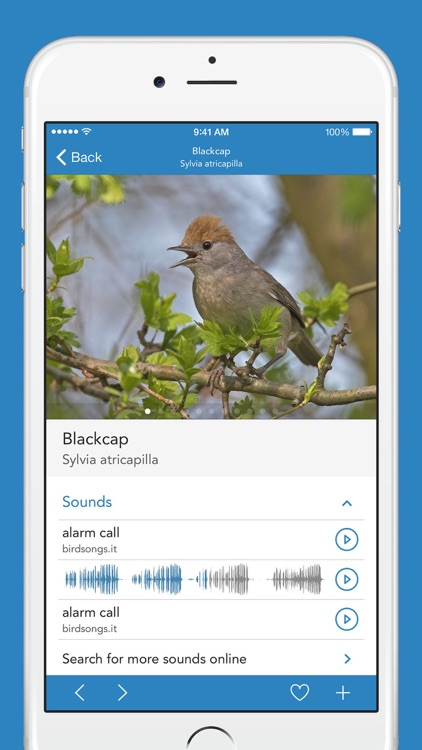 Birds PRO HD screenshot-2