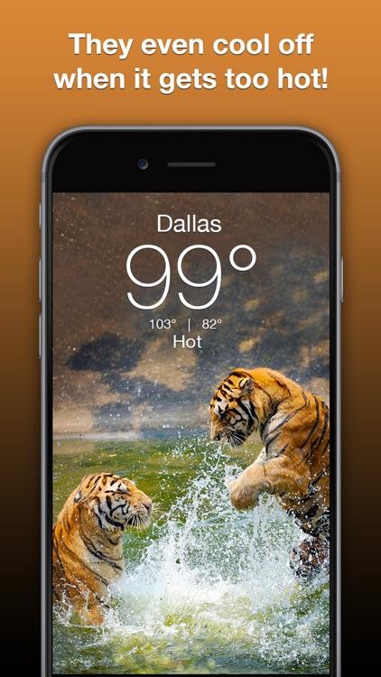 Wildlife Wallpaper Weather screenshot-3