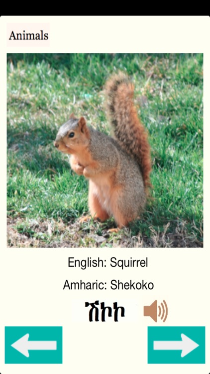Animals Names in Amharic