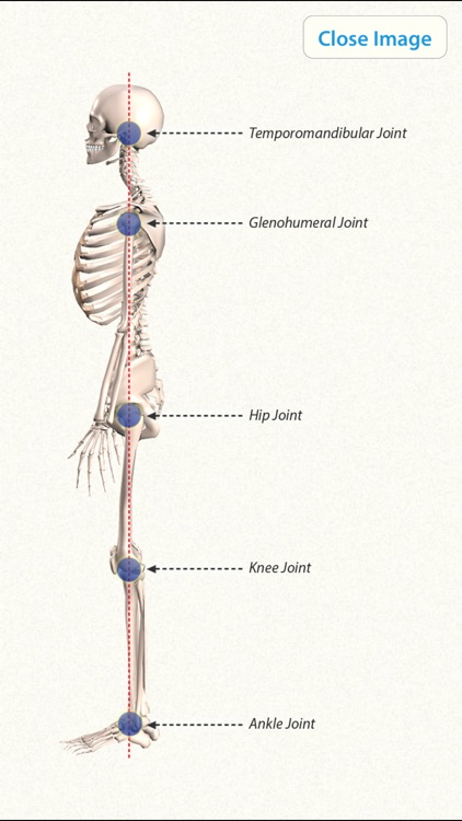 3D Yoga Anatomy screenshot-4