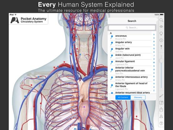 Pocket Anatomy (2018) Screenshots
