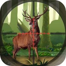 Activities of Big Deer Target