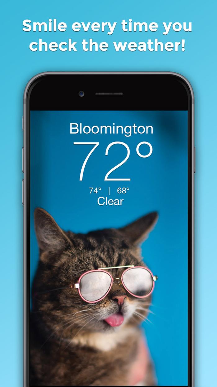 Lil BUB Cat Weather Report Screenshot