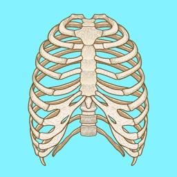 Skeletal System Biology