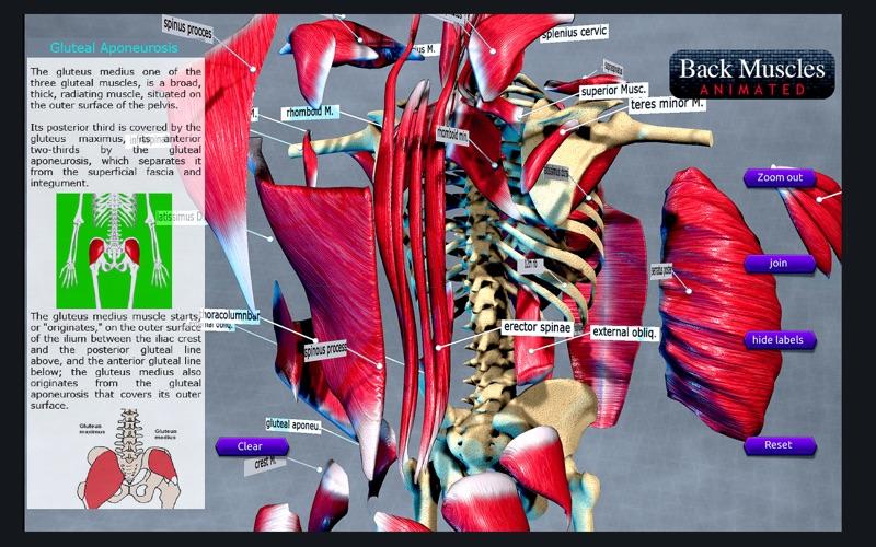 Back Muscles Animated скриншот программы 4