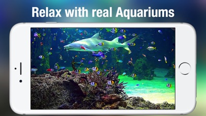 Screenshot #8 for Aquarium Live HD