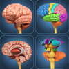 My Brain Anatomy
