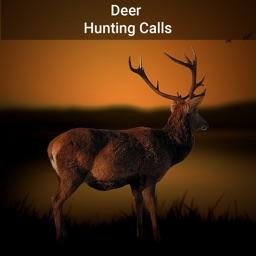Deer Hunting Calls!