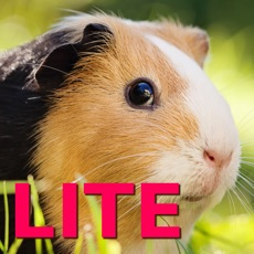 Activities of Guinea Pig Jigsaw Puzzle Games