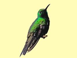My Hummingbird Stickers