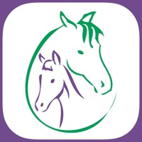 Codes for Stretch Your Horse Hack