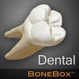 BoneBox™ - Dental Lite