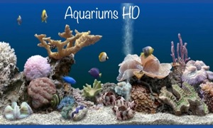 Aquarium Fish Tank HD