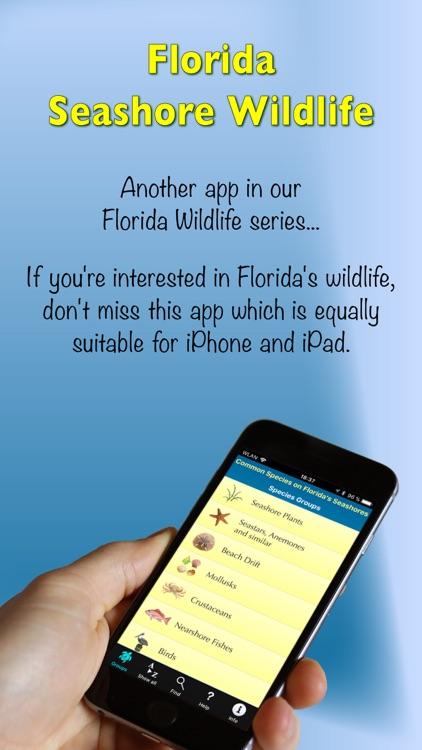 Florida Seashore Wildlife