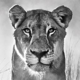 Giltedge Africa Luxury Safaris