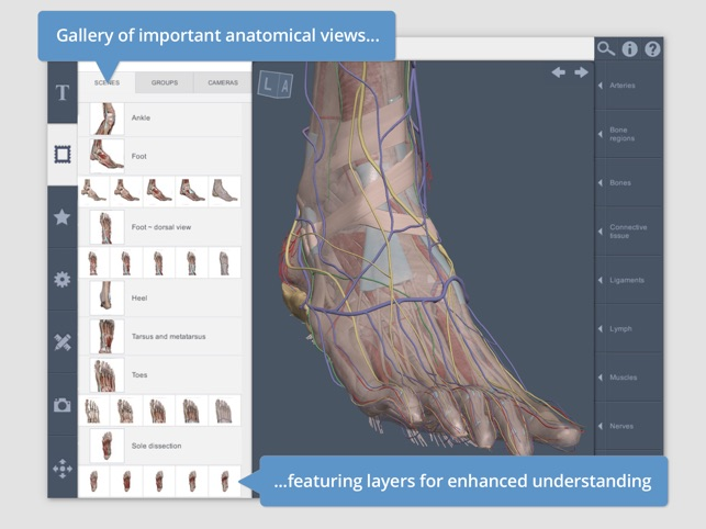 Leg, Ankle, Foot: 3D Real-time on the App Store