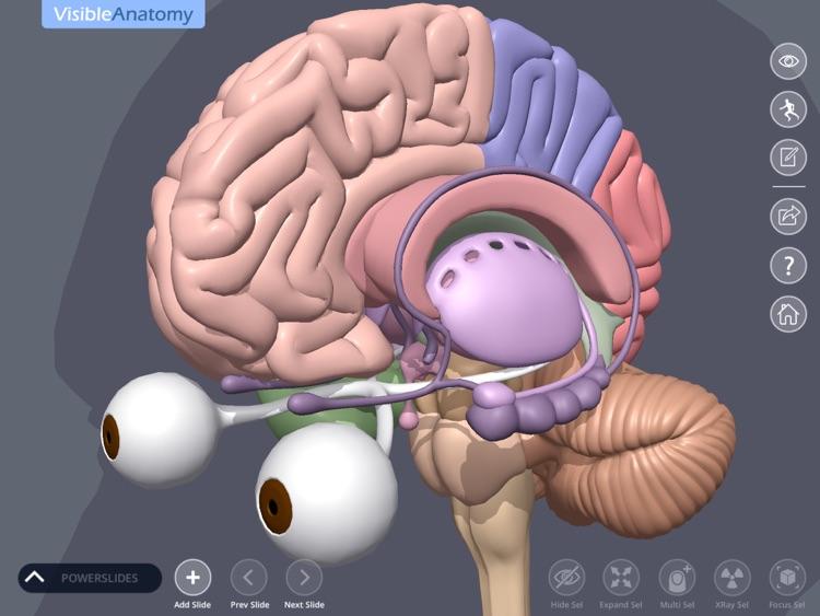 Visible Anatomy screenshot-3