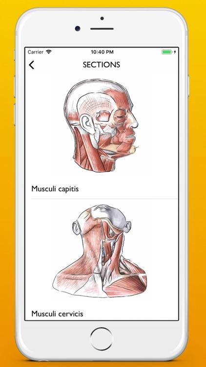Myology atlas app screenshot-4