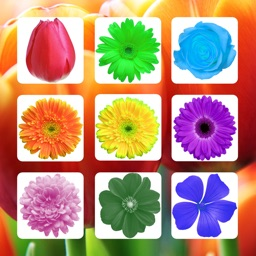 Flower Sudoku  - Puzzle Game