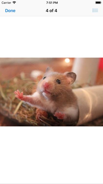 Hamster Sticker Pack screenshot-4