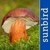 Mushroom Guide British Isles