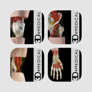 3D4Medical's Body Regions for iPhone