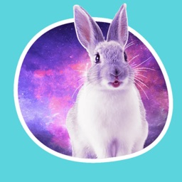 Space Bunnies Stickers