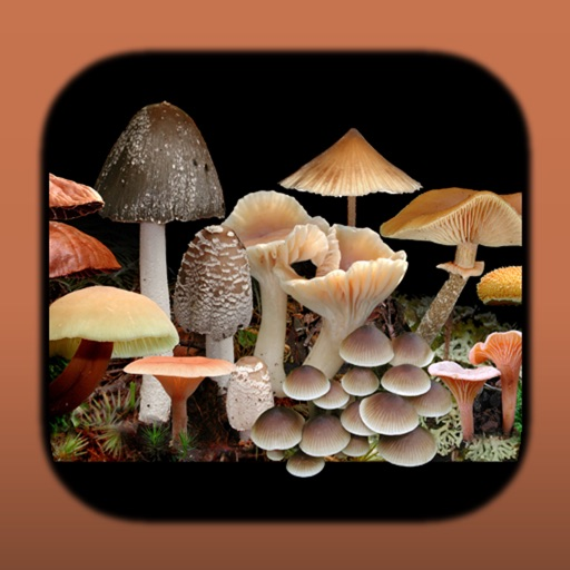 FunKey: Key to Agarics of Australia