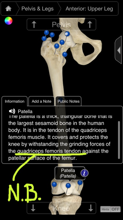 Skeleton System Pro III-iPhone