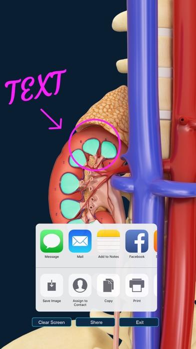Urinary System screenshot four