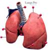 LungsProAnimated - USaMau03