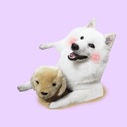 Dog Animations Stickers