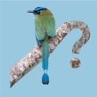 Panama Birds Field Guide icon